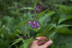 Käsi ojentuu kohti violettia kukkaa.